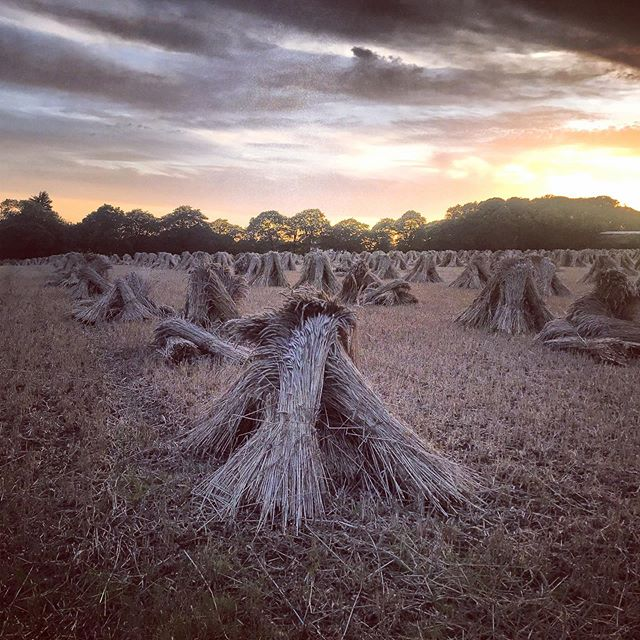 Corn Stooks #devon #sunset #locationphotography #cornstooks #countrylife #locationphotographer