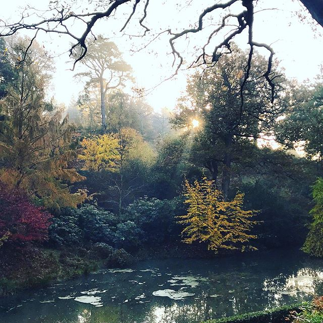 Perfect morning for my shoot @leonardsleegardens #gardenphotography #gardenphotographer #gardenphoto #leonardsleegardens #autumn #autumncolour #mist #autumnlight
