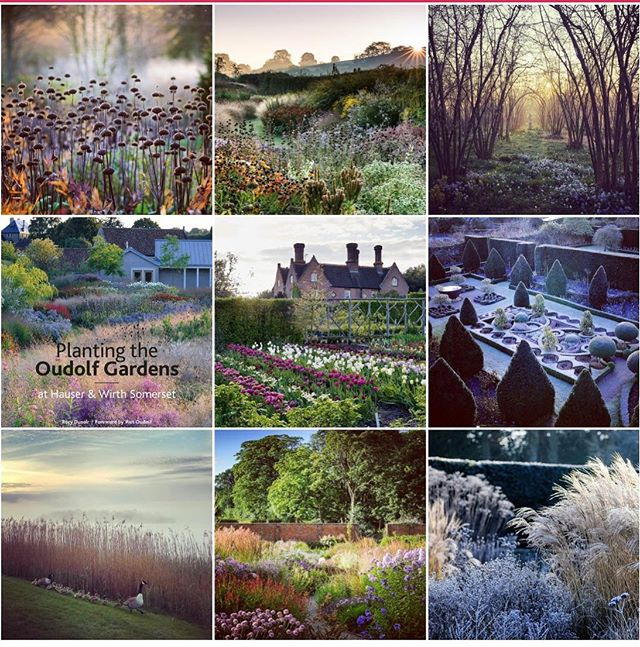 First day back and Happy New Year, here's to a good 2020  #topnine2019 #best92019 #gardens #gardenphotography #gardenphotographer #phaseonephoto #nikonphotography #nikon