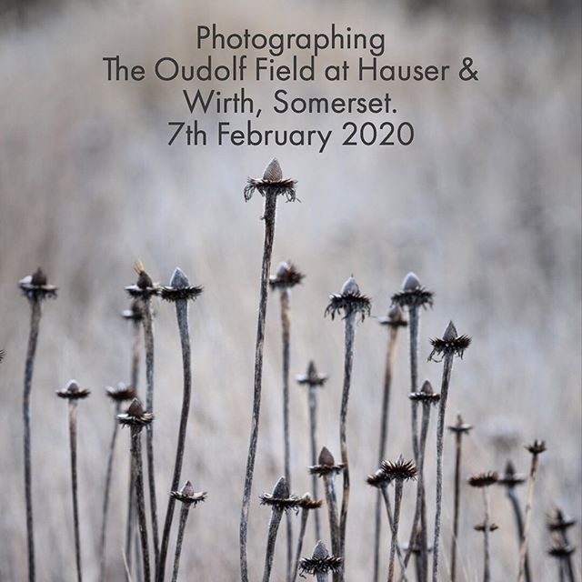 I have an exciting new date for a one day garden photography course @hauserwirthsomerset . You will get the chance to photograph The Oudolf Field in all it's Winter beauty on 7th February 2020. Places are limited, see my story for booking details https://www.hauserwirth.com/events/26757-photographing-oudolf-field-jason-ingram  #pietoudolf #hauserandwirthsomerset #gardenphotography #gardenphotographer #gardenphotographycourse #gardenphotographycourse